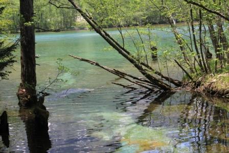 神秘的な川