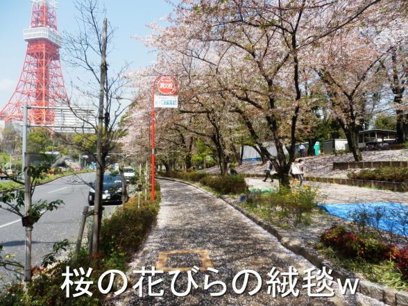 20150406 桜の絨毯