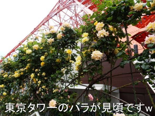 20150507 東京タワーのバラ