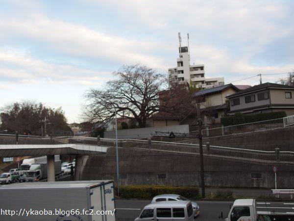 20150309edasakura7.jpg