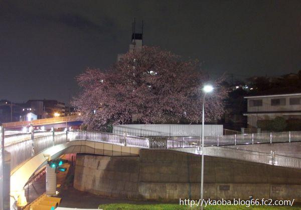 20150315sakura005.jpg