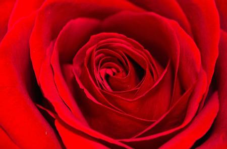 flower-20189_640.jpg
