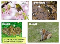 next-ph spring 4