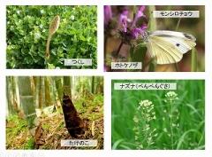 next-ph spring 5