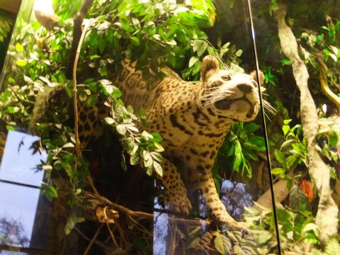 熱帯のジオラマ1