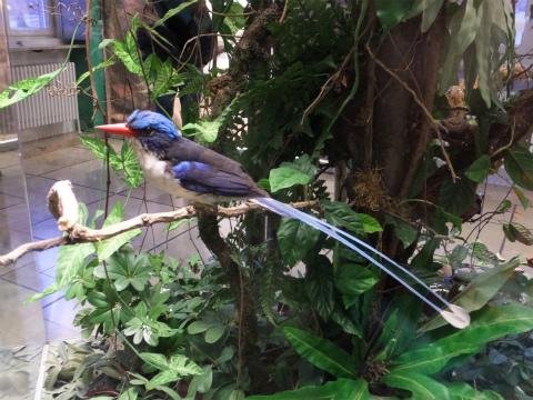 熱帯のジオラマ2