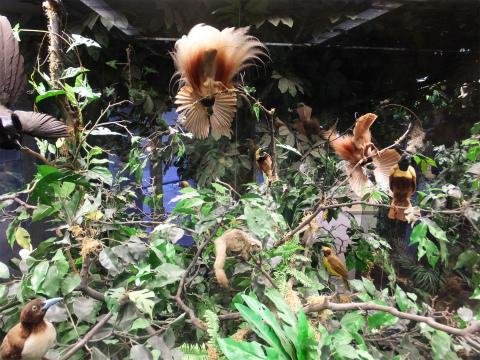 熱帯のジオラマ3
