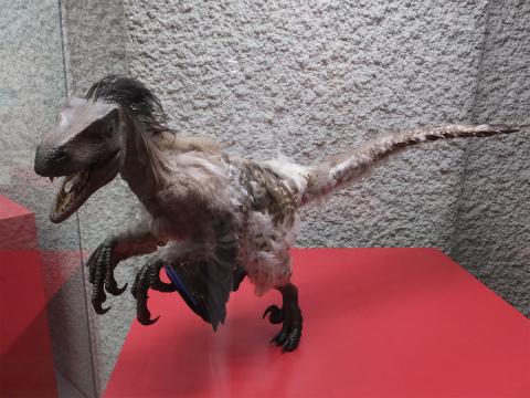 羽毛恐竜1