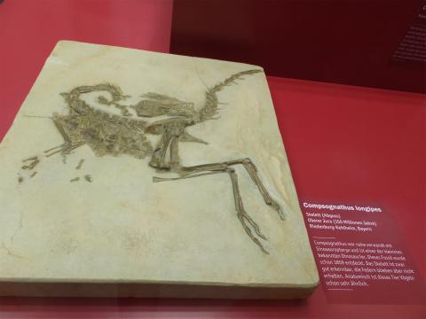 羽毛恐竜の化石