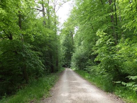 Körschtalの森1