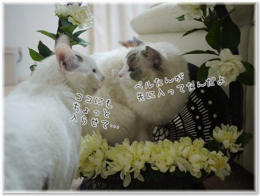 001-3RnNY1e5OKwM0zcU1418397953_1418398261.jpg