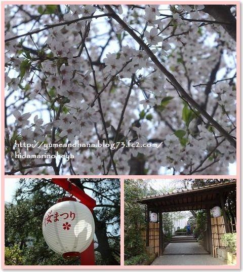 01-桜150406-3