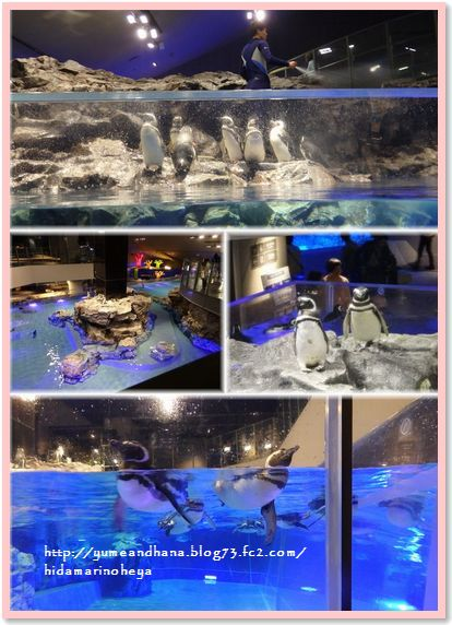 001-水族館150406-1730