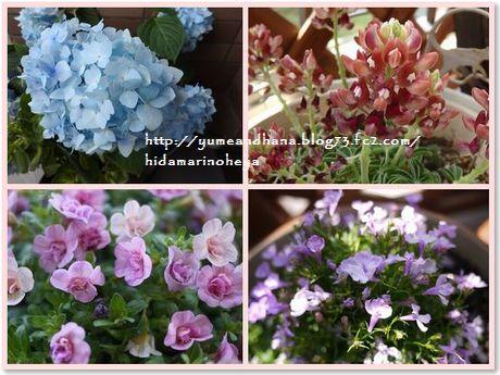 0001-ベランダの花150522