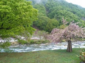 2015niigata春1-2