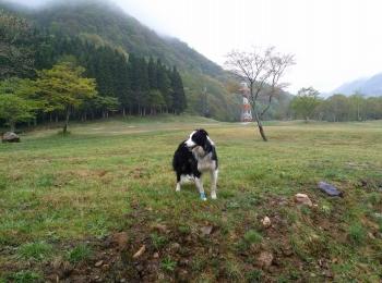 2015niigata春1-3