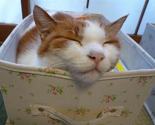 ブログNo.264(枕好き猫)7
