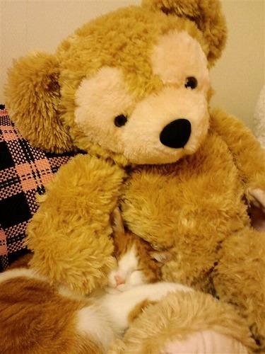 ブログNo.264(枕好き猫)1