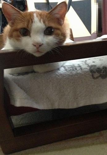 ブログNo.264(枕好き猫)2