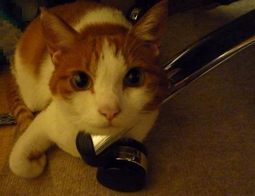 ブログNo.264(枕好き猫)6