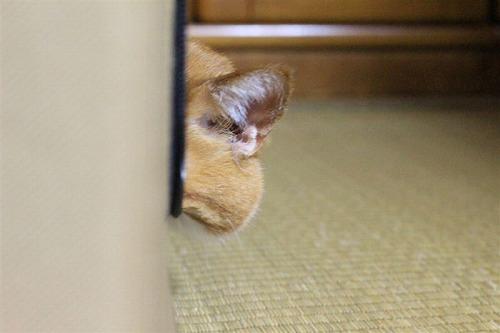 ブログNo.264(枕好き猫)8