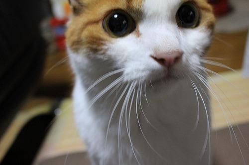 ブログNo.274(激おこ猫&紫陽花)1