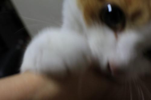 ブログNo.274(激おこ猫&紫陽花)2
