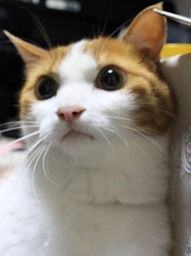 ブログNo.274(激おこ猫&紫陽花)4