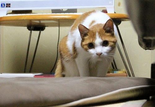 ブログNo.117(獲物を狙う猫の動き)3