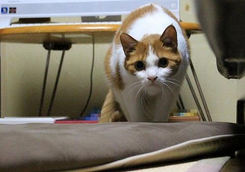 ブログNo.117(獲物を狙う猫の動き)4