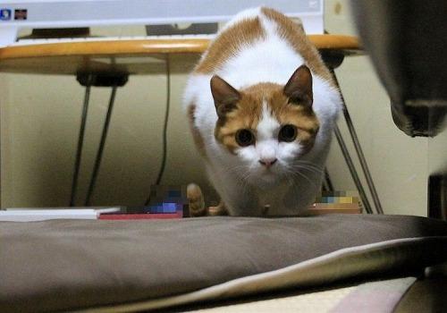 ブログNo.117(獲物を狙う猫の動き)5