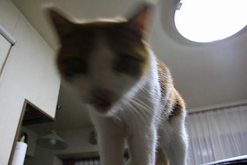 ブログNo.117(獲物を狙う猫の動き)6