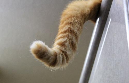 ブログNo.118(猫の不思議な習性と当たり前の習性)2