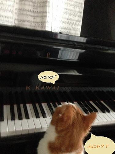 ブログNo.134(ピアノを弾く猫)7