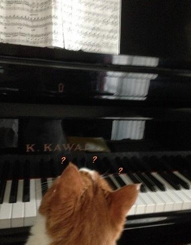 ブログNo.134(ピアノを弾く猫)8