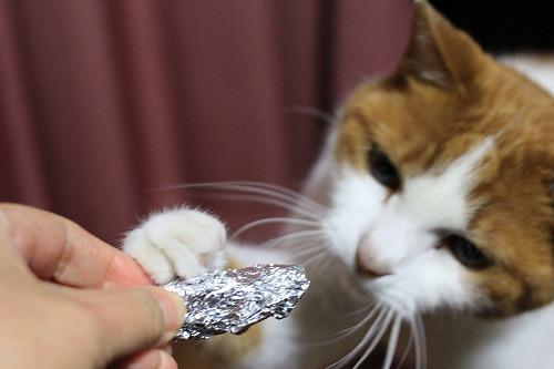 ブログNo.121(相変わらずゴミに萌える猫)2