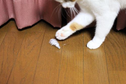 ブログNo.121(相変わらずゴミに萌える猫)3
