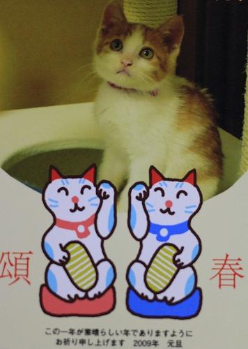 ブログNo.105(年賀状で振り返る猫)2