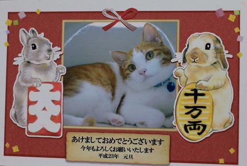 ブログNo.105(年賀状で振り返る猫)3