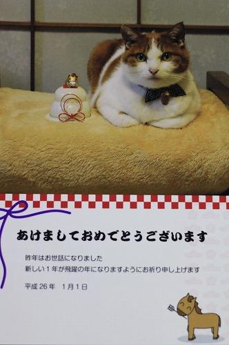 ブログNo.105(年賀状で振り返る猫)5