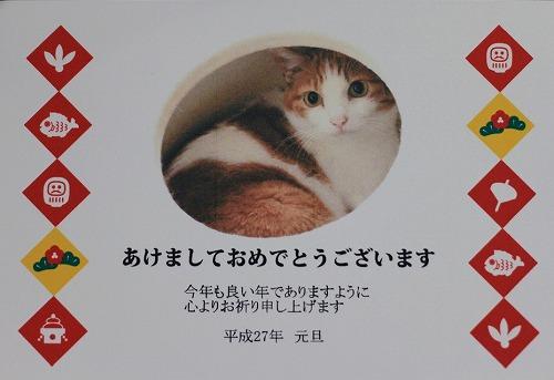 ブログNo.105(年賀状で振り返る猫)1
