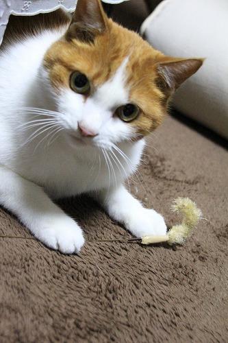 ブログNo.126(猫じゃらしで遊ぶ猫)3