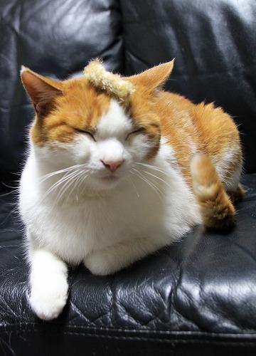 ブログNo.126(猫じゃらしで遊ぶ猫)8