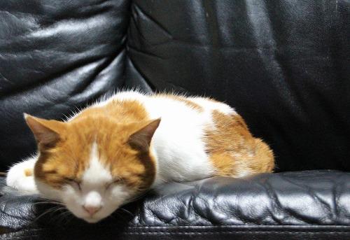 ブログNo.126(猫じゃらしで遊ぶ猫)10