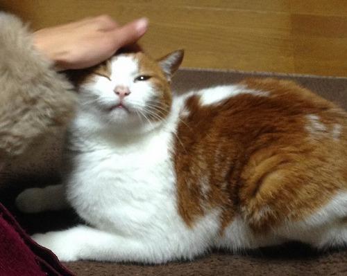 ブログNo.98(ツンデレ猫)4