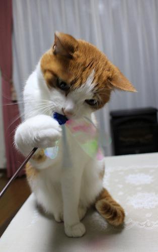 ブログNo.155(獲物を狙う猫)9