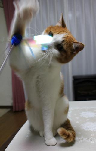 ブログNo.155(獲物を狙う猫)10