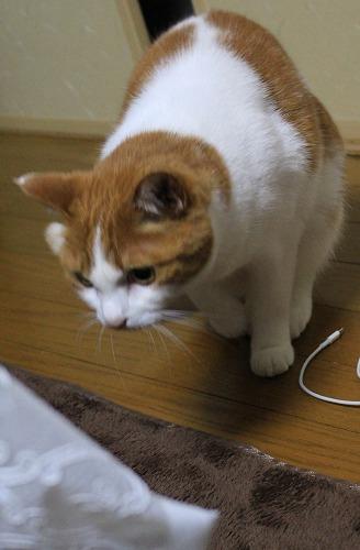 ブログNo.155(獲物を狙う猫)4