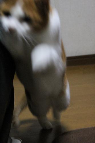 ブログNo.155(獲物を狙う猫)7