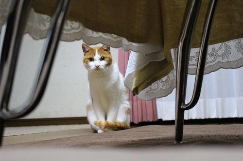 ブログNo.155(獲物を狙う猫)1